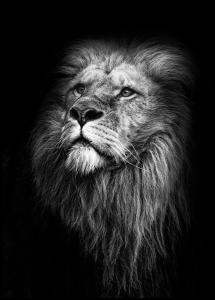 King Of Lions Poster