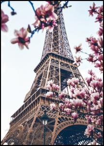 Eiffel Tower Blossoms Poster