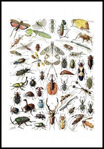 Planche avec insectes II Poster