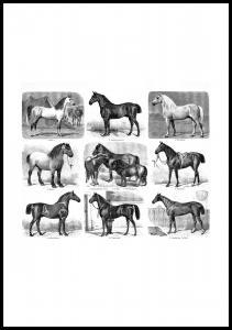 Races de chevaux Poster