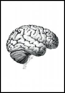 Planche avec parties du cerveau Poster