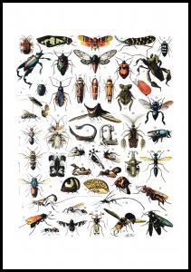 Planche avec insectes I Poster