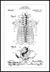 Dessin de brevet - Squelette anatomique II - Poster
