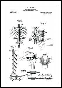 Dessin de brevet - Squelette anatomique III - Poster
