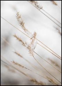 Swaying Reed II Poster